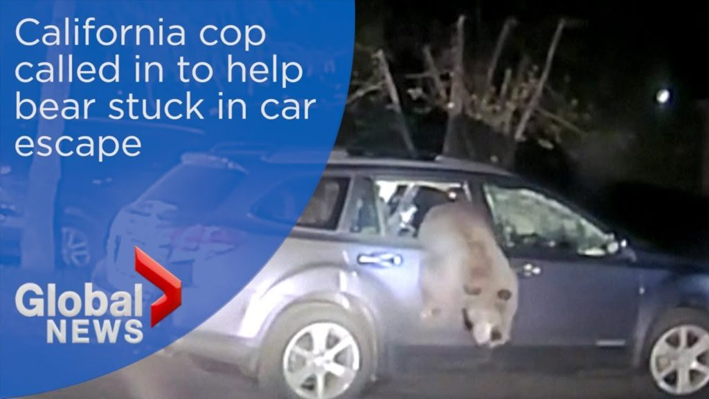 SEE IT: California Deputy Frees Bear Trapped Inside Car, Then Runs For His Life